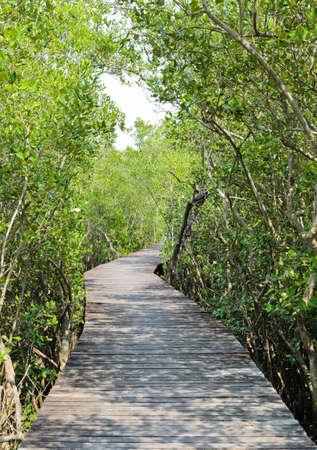 reforestation: Mangrove reforestation in Thailand