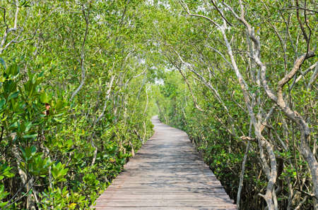 Mangrove reforestation in Thailand photo