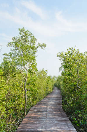 Walking bridge through the mangrove forest photo
