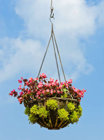 Flower hanging basket in blue sky photo