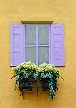 Window with flower pots on yellow wall photo