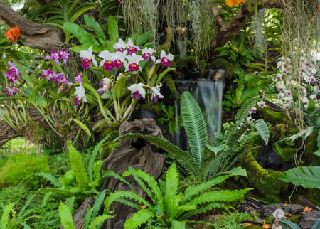 Decorated orchid garden with waterfall Stockfoto