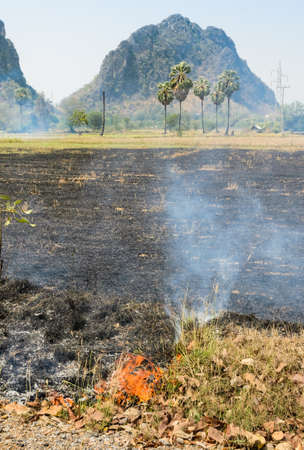 Burning rice field after harvesting  photo