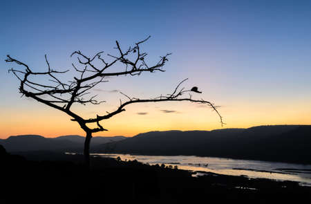 Sunrise over mountain with silhouette tree photo