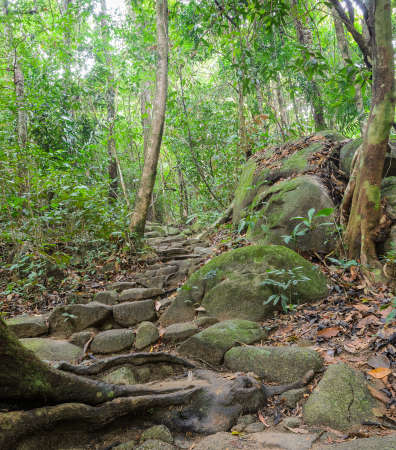 Hiking trail through rainforest, Thailand