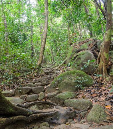 Wanderweg durch den Regenwald, Thailand Standard-Bild - 28879668