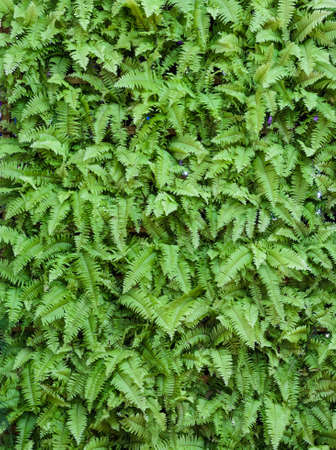 Green fern leaf wall background photo