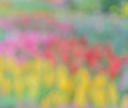 flowerbed: Defocused colorful flowerbed background