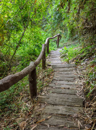 Stairway in the Deciduous forest, Thailand Stock Photo - 34834209