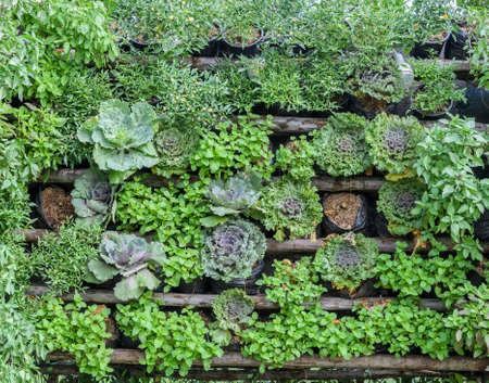 垂直の品揃えの菜園