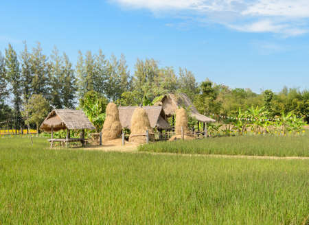 Small huts in rice paddy field, Thailand photo