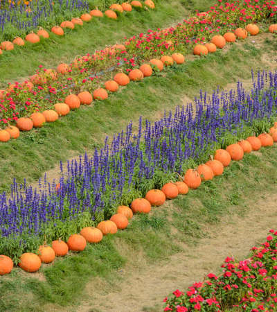 Colorful decorated flower garden with pumpkin photo