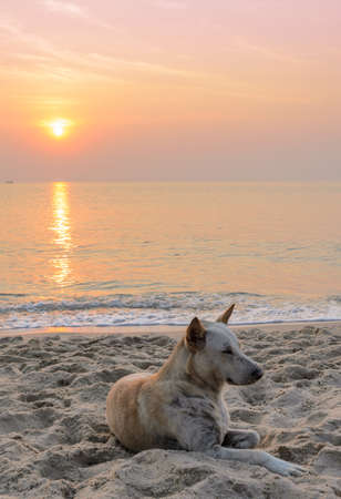 Brown dog on the beach at sunrise photo