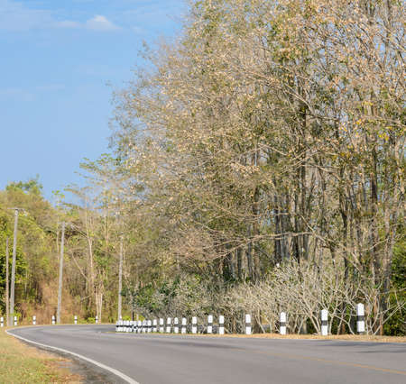 curve road: Asphalt curve road with deciduous tree in lowangle shot Stock Photo