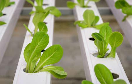 Organic Wasserkulturgemüseplantage in Aquaponics System Standard-Bild - 40228754