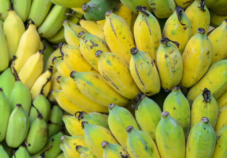 musa: Bunches of Musa sapientum or Cultivated Banana in Thailand