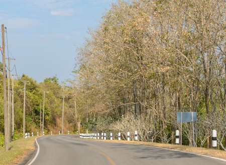 curve road: Asphalt curve road with deciduous tree in sunny day
