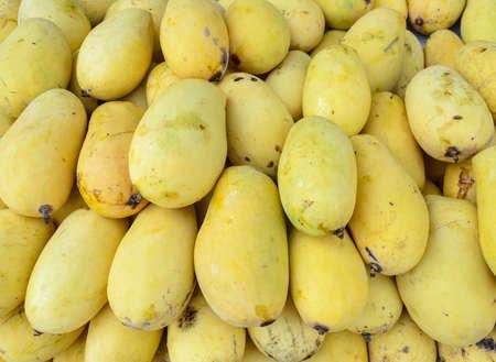 mango: Stacks of ripe Thai yellow mangoes fruit in fresh market, Thailand Stock Photo