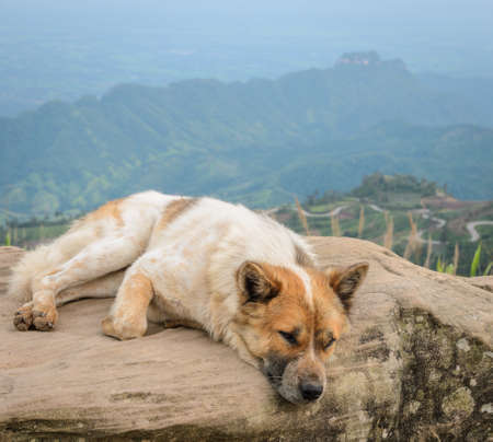 dog rock: Happy dog sit on a large rock on a background of mountain with sharp S-curve road