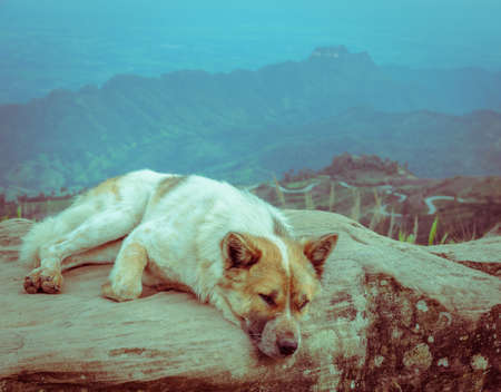 dog rock: Happy dog sit on a large rock on a background of mountain with sharp S-curve road. Retro or vintage filtered.