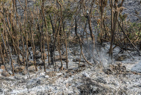 smut: Ash smut and stubble of burned field farm after harvest. Global warming concept Stock Photo