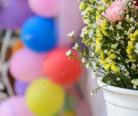 aniversary: Chrysanthemum ornamental in white flowerpot with balloon background.