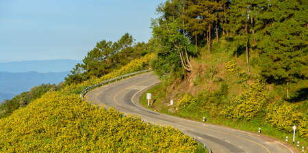 sharp curve: Beautiful view of mountain sharp curve road with wild Mexican sunflower valley in Maehongson Province, Thailand