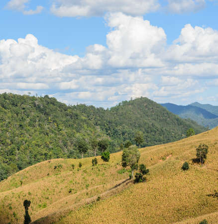 mountain ranges: Dried corn terrace field against mountain ranges in Thailand Stock Photo