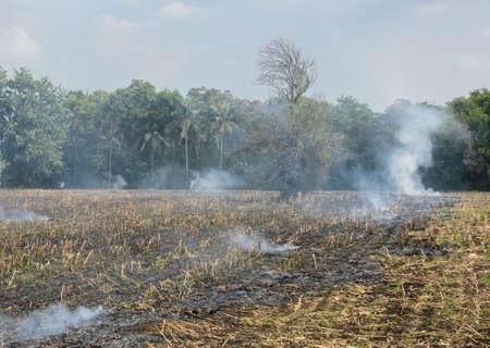 smut: Burnt sugarcane field after harvest. Global warming concept Stock Photo