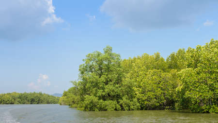 phang nga: Landscape of tropical mangrove forest in Phang Nga Bay National Park, Thailand