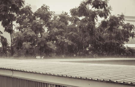 trickle down: Torrential rain on corrugated roof during heavy rainfall. Rainy season nature concept. Vintage effect image.