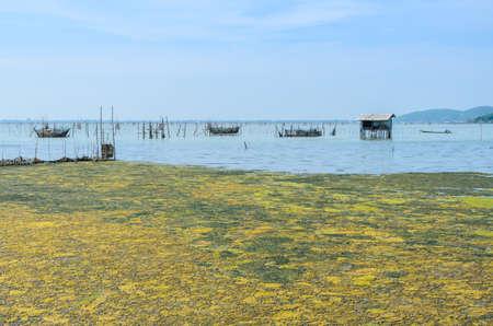 Algal bloom in a tropical ocean and marine fish farming, Thailand