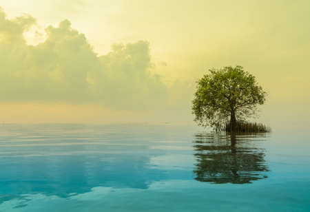 Seascape with mangrove apple stands lonely. Yellow and blue color image