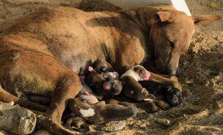 Dog nursing newborn puppies Zdjęcie Seryjne