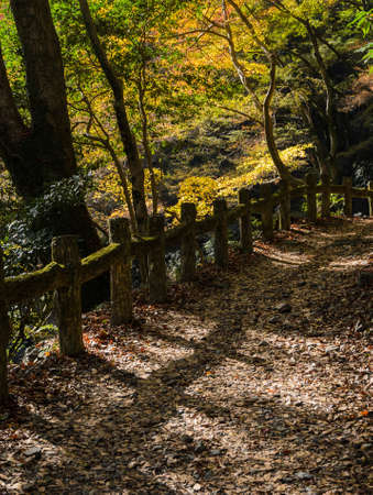 Hinking trail at Minoo or Minoh park in autumn, Osaka, Japan. One of Japans oldest national parks.