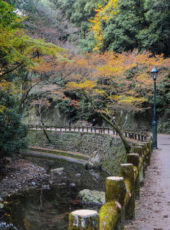 Minoo or Minoh park in autumn, Osaka, Japan. One of Japans oldest national parks. 報道画像