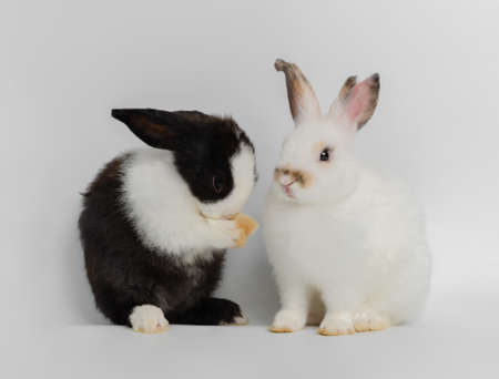 Two cut rabbits with different actions. white rabbit sitting while black and white rabbit standing on white background. Lovely action of adorable baby rabbit