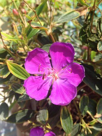 violette fleur: Purple flower Banque d'images