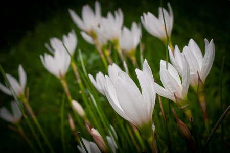 pull up: I fiori tirare a basso punto di vista Archivio Fotografico