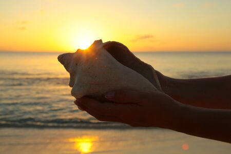 caching: sea shell in the hand caching the sun