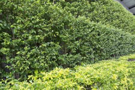 assort: Fresh Green leaves texture background Stock Photo