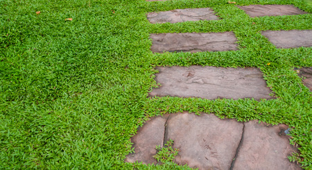 walk path: Walk path with green grass background. Stock Photo