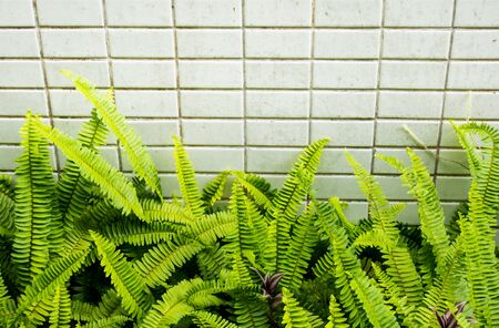 ferns: Ferns leaf with tiles texture background.