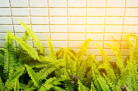 ferns: Ferns leaf and tiles texture background with sun light.