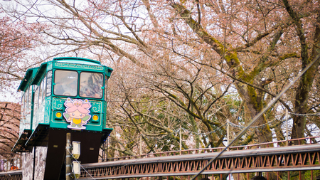 in full bloom: FUNAOKA , JAPAN - APRIL 12, 2017 : A group of tourists use the slope car service up to the view point through the cherry trees in full bloom at Funaoka Castle Ruin Park