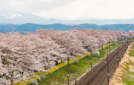 The railroad track with a row of cherry trees along the Shiroishi river at funaoaka Sendai transport and travel concept