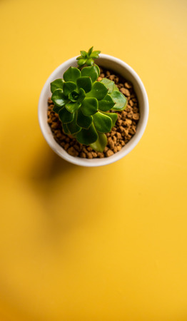 A tree in a small pot on the yellow table background in top view