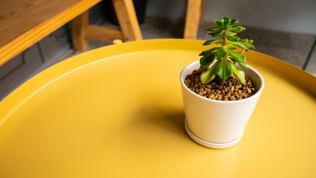 A tree in a small pot on the table background in ecology concept 写真素材