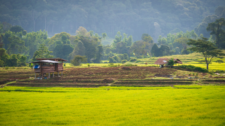 Rice Hut In the rice planting with rice fields that are fresh green in agriculture and nature concept 写真素材