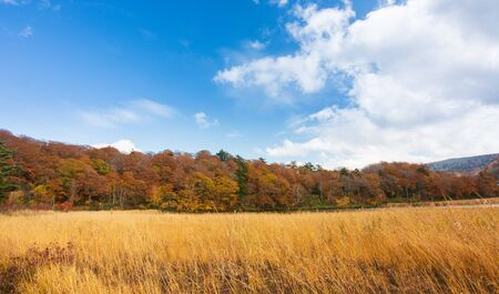 Autumn Leaves background with blue sky in sunny day. A wonderful view of The scenery in autumn is before the winter. Autumn leaves in different colors in nature concept